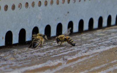 Concours «Un nom pour notre miel»