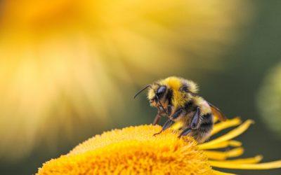 Concours «une étiquette pour notre miel»